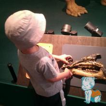 Museon Haga - expozitie dinozauri